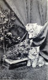 peekabo-kittens