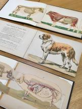 Material from the Historic Collections of the Royal College of Veterinary Surgeons